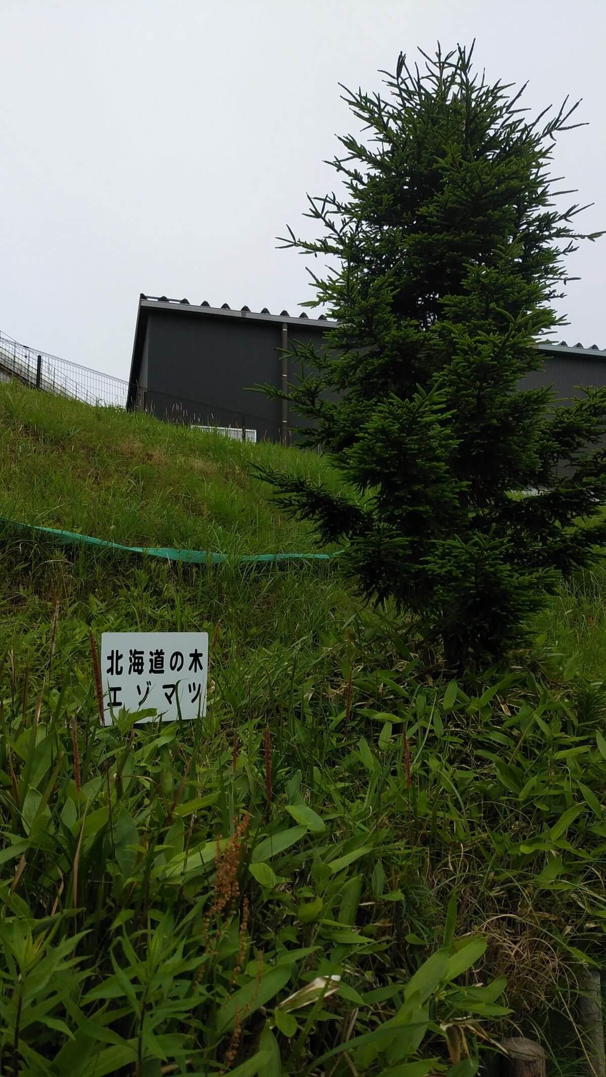 北海道の木