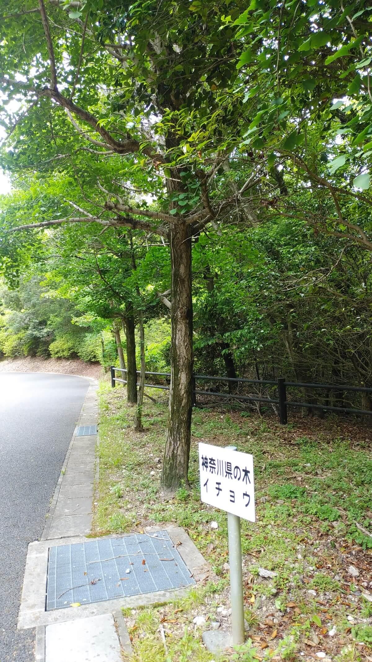 神奈川の木