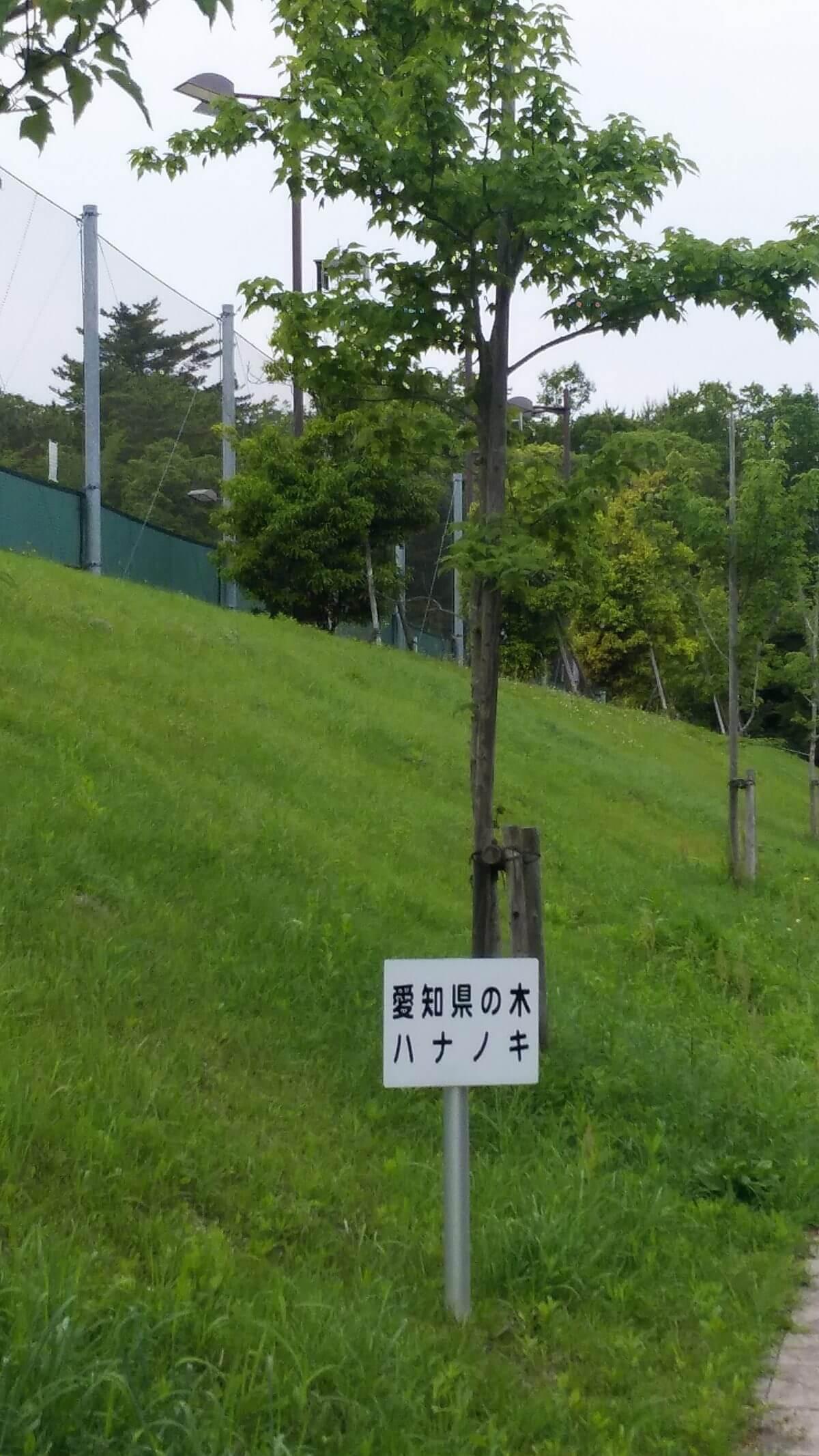 愛知県の木